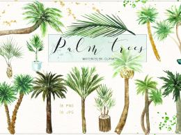 椰子树水彩剪贴画 Palm trees. Watercolor clipart.